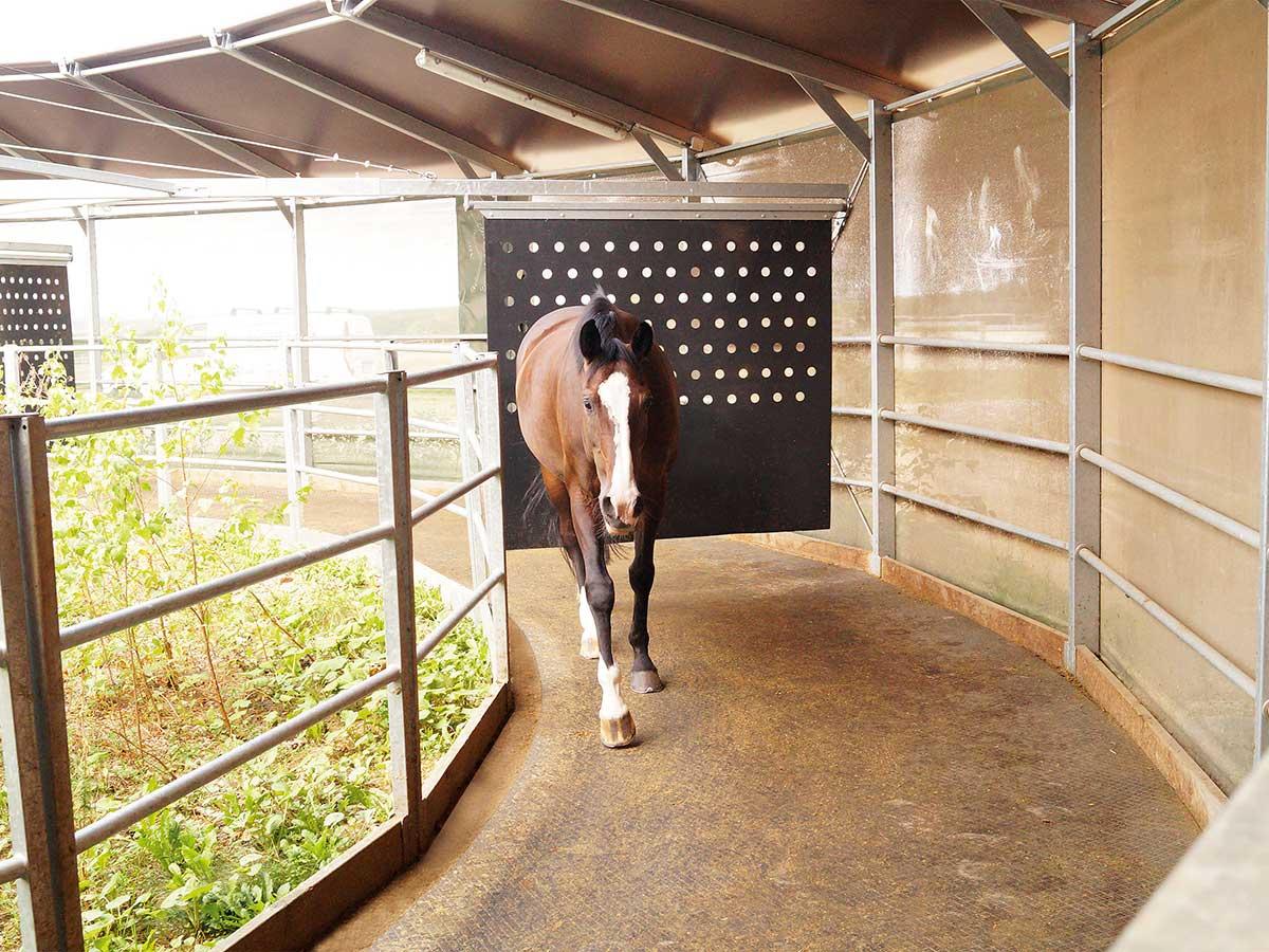 Pro Equus Horsewalker Gummimatte