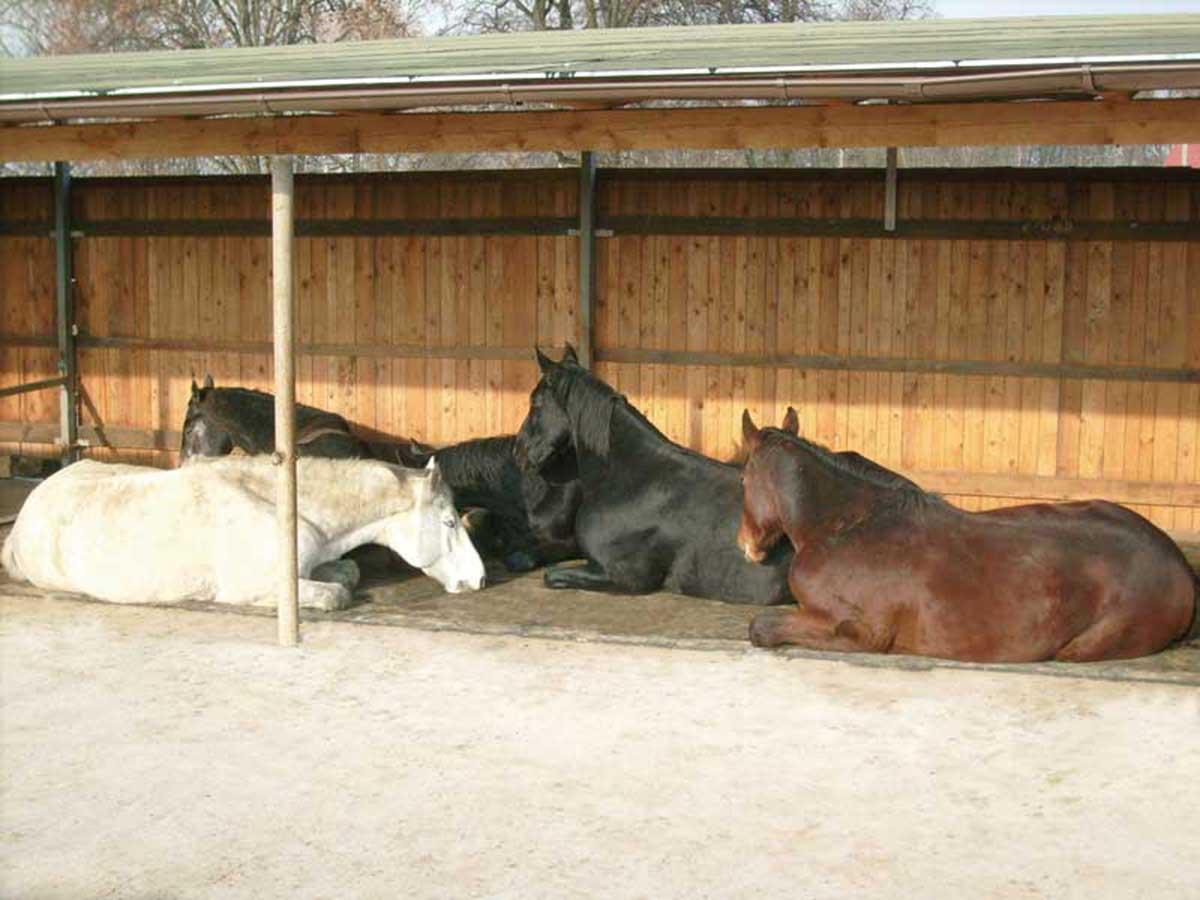 Softbed Pferde Offenstall