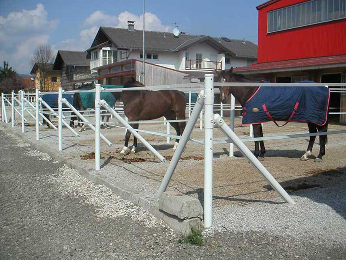 Paddockzaun mit Pferden