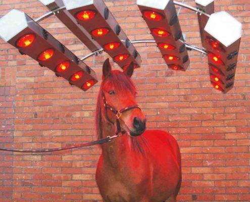 Solarium für Pferde