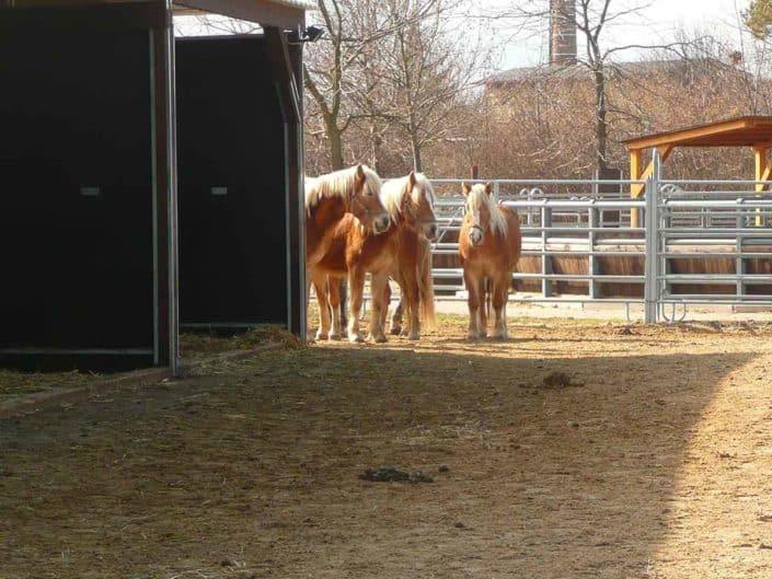 Vet Med Uni Pferdepaddock